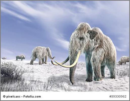 Gut gegen die Kälte geschützt: Wollhaarmammuts