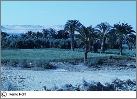 Eine Oase am ägyptischen Fayum See