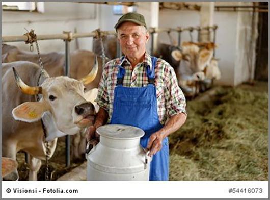 Ein heutiger Milchbauernhof
