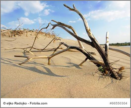 Dieser Baum hat den Kampf gegen die Wüste verloren