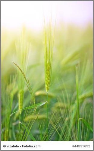 Schafft Nahrung für viele Menschen: Ackerbau